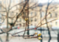 В Петербурге расцвела сакура