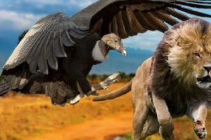 Птицы, встреч с которыми следует опасаться