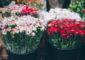 В Петербурге цветочный магазин на Енотаевской продолжает работу, несмотря на запрет