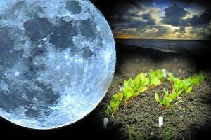 Посадочные дни в мае 2020 года для получения щедрого урожая лучше выбрать по лунному календарю
